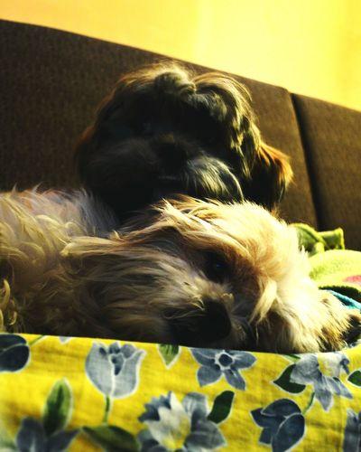 Popular Photography Photooftheday Good Times Eye4photography  Photo Of The Day Family Dogoftheday Dogs Dogoflove