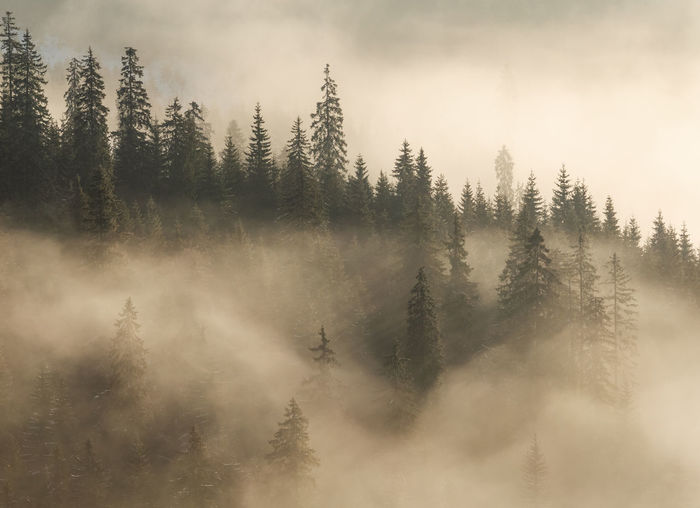 Abstract landscape in the mountains, with fog in the forest, in the morning Backgrounds Abstract Abstract Backgrounds Beautiful Cold Temperature Fairytale  Forest Mountain Haze Fog Foggy Foggy Morning Foggy Day Light Scene Scenery Snow Nature Nature_collection Park Trees Mistery Outdoors Textured  Silence Beauty In Nature Plant Tranquil Scene Tranquility Scenics - Nature Tree Land Environment Coniferous Tree Non-urban Scene No People Sky Idyllic Pine Tree WoodLand Evergreen Tree Pine Woodland