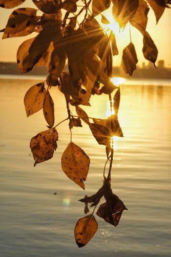 листья желтые листва вода шарташ озеро осень