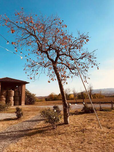 Piacenza Tree
