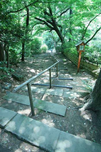 Early Summer Road Reef Spring エメラルドグリーン 初夏 爽やか Shinto Shrine Stairs Tree Steps Walkway Long Stairway Railing EyeEmNewHere