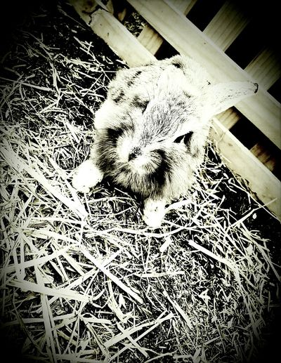 Bunny 🐰 Cute Pets Grass Old Time Photos My Friend p Pet Photography  Pets