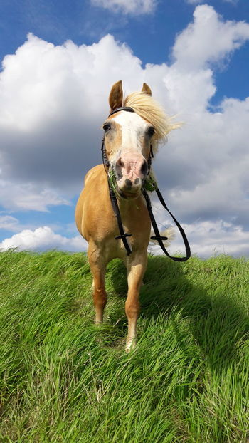 Horse One Animal Cloud - Sky Sky Pets Full Length Grass Domestic Animals Outdoors Day No People Mammal Water Animal Themes