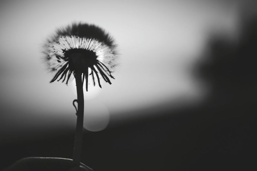 Plant Beauty In Black And White No People Outdoors Nature Sunset