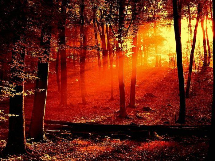 Tree Foresthills Naturesbeauty . Redlight Greenry OpenEdit Lensflare Lenses. Forest Path First Eyeem Photo