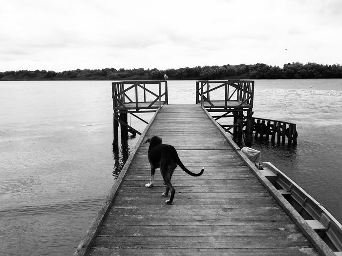 Rear view of man on pier at lake