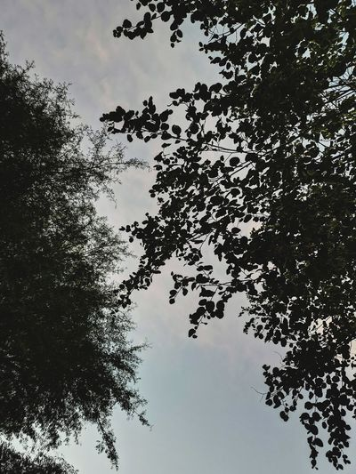 Bird Tree Water Flock Of Birds Lake Reflection Silhouette Sky Animal Themes