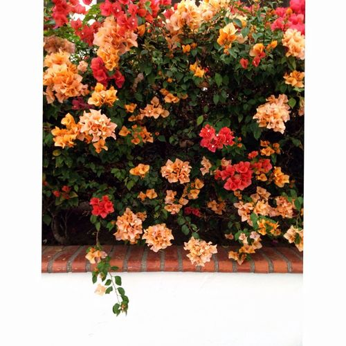 Artistic Eye Tropical Flowers Minimalism Square Framed Flowers Beautiful Many Flowers Window Of Flowers High Angle View Fragility Freshness Close-up Flowerbed Flower Head Multi Colored Beauty In Nature