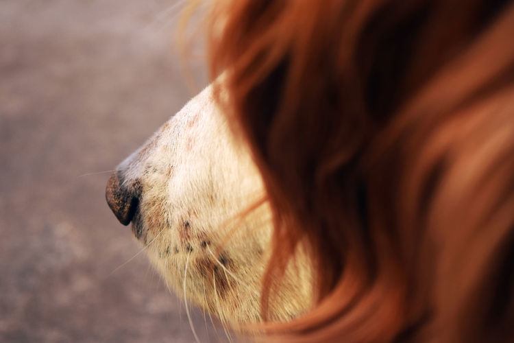 The Week On EyeEm One Animal Mammal Animal Body Part Domestic Animals Animal Themes Close-up Day Outdoors Pets Human Body Part One Person Nature People Young Adult Eyelash EyeEmNewHere Dog Dogs DogLove Setter Setteringles Doglife Dogs Of EyeEm Dogphoto Pet Portraits