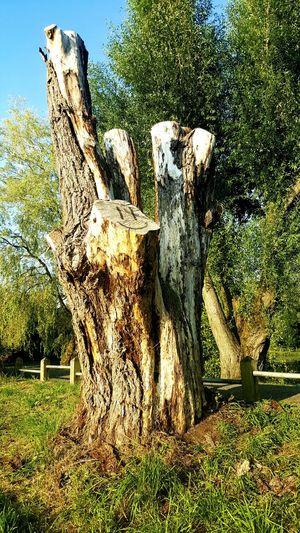 Tree Trunk Tree Trunks Tree Trunk, Tree, Fallen Tree Dead Tree Dead Tree Trunks