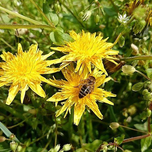 Ilkbahar Arı çiçek Doğa Önder Koyu