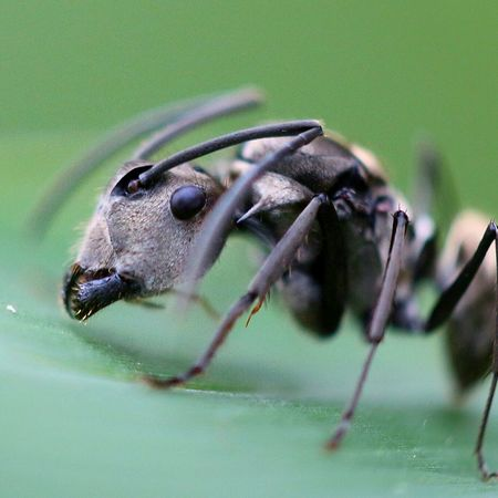 Ini mataku ... mana matamu... Macro Photography Taking Photo Macro Insects