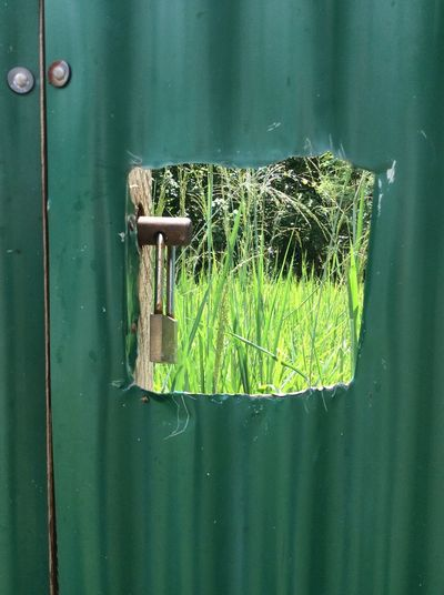 Cut square through green corrugated metal fence Padlock Cut Metal Field Of Grass Green Color No People Metal Protection Security Day Entrance