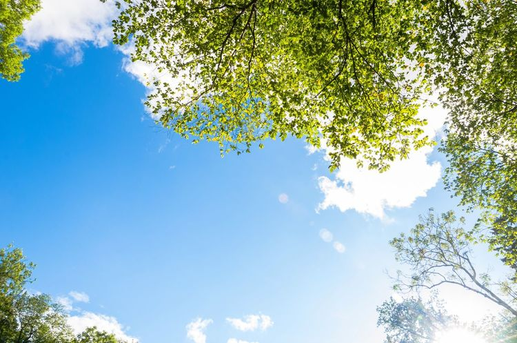 Blue sky thinking-ish. Copy Space In Sky Copy Space Summer Sky Clouds Trees Leaves Branches Green Blue Sky Blue Sky Thinking Nature Outdoors Looking Up Skies Sky Bright Day Bright Sky Nobody Plants Sunny Day Bright Day Sunlight Sunshine Space