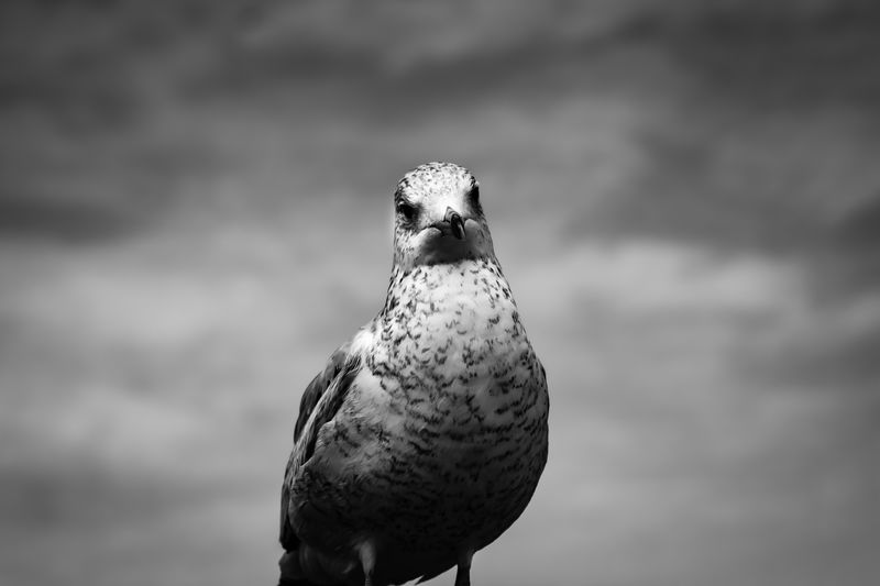 Seagull Sky And