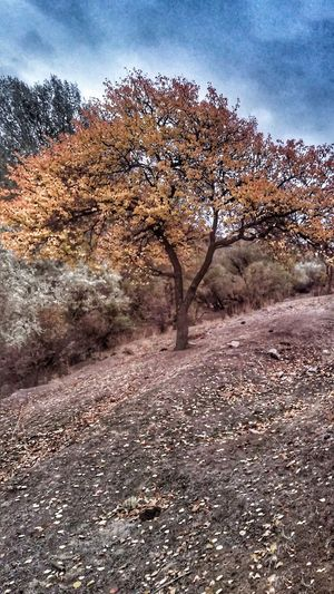 EyeEmNewHere Nature Landscape Outdoors Tree Day Tranquility No People