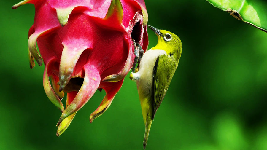 Picture of the is a dream of mankind to fly like a bird Bird Photography EmeEmPhoto Animal Themes Animal Wildlife Animals In The Wild Beauty In Nature Bird Close-up Day Flower Focus On Foreground Fragility Freshness Green Color Growth Nature No People One Animal Outdoors Photography Plant Red