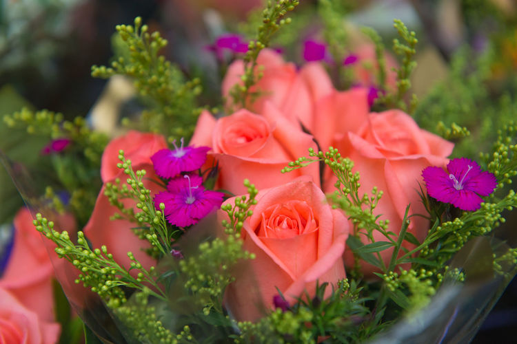 Beauty In Nature Bouquet Close-up Day Flower Flower Arrangement Flower Head Flowering Plant Fragility Freshness Growth Inflorescence Leaf Nature No People Outdoors Petal Pink Color Plant Plant Part Rosé Selective Focus Vulnerability