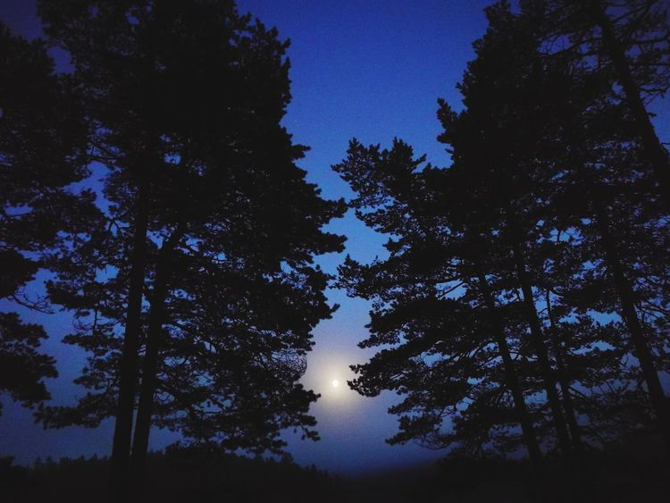 Tree Forest Sky Low Angle View Nature Night Tranquility Moon Outdoors Tranquil Scene Beauty In Nature Landscape Norway🇳🇴 Autumn Travel Destinations Beauty In Nature Moon Tent Camping Tranquility