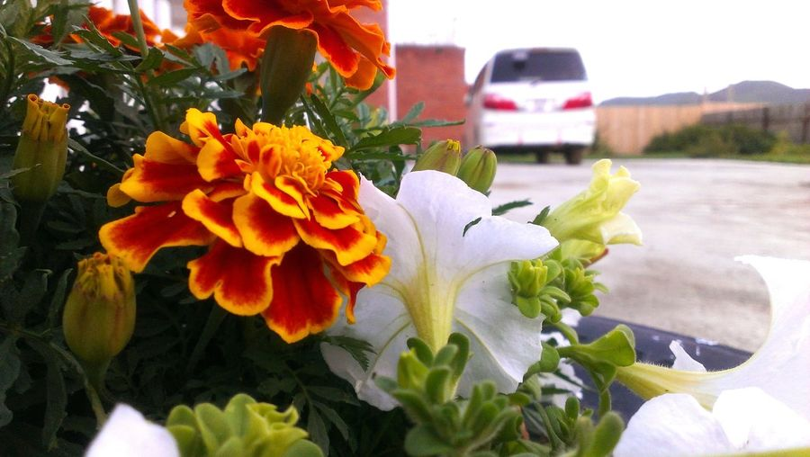 Flowers,Plants & Garden My Plant Check This Out HTC Photo By Me Pictures From My Homeland Taken By Me . HTC_photography Best Of The Best