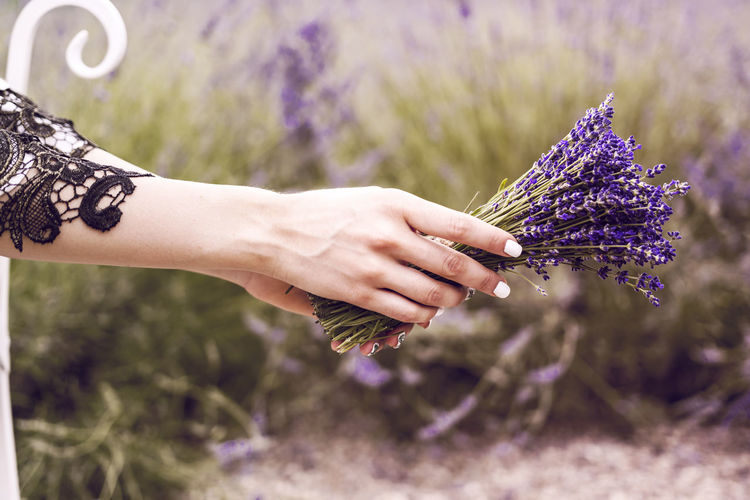 Cropped hands of woman holding purple flowers