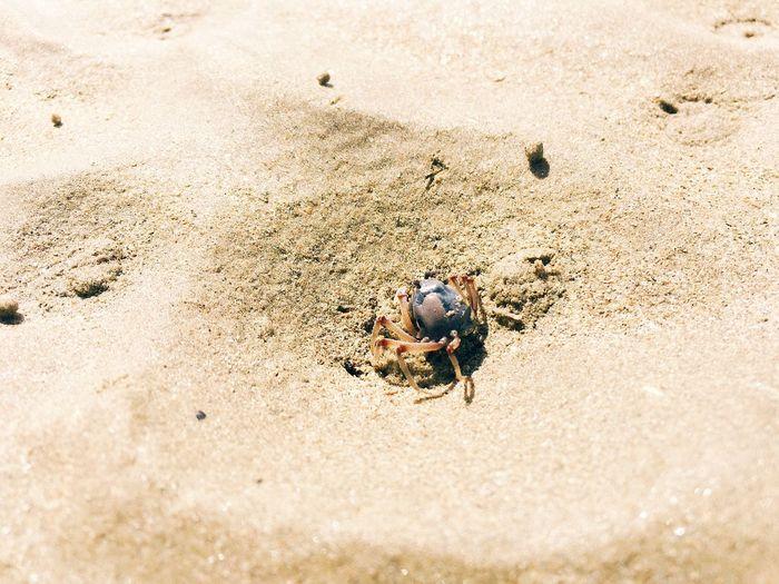 High angle view of crab at beach