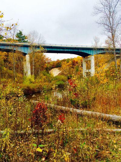No Filter No Edit/no Filter River Field Love Autumn Autumn Autumn Colors Michigan Puremichigan