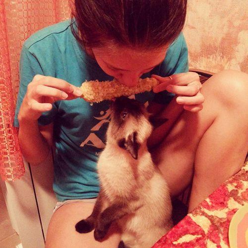 А кошка то никак не угомониться, мою последнюю еду отбирает)))) кошка Кукуруза голод наглость яподелюсьмненежалко