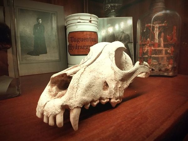 Dog Skull Beauty In Death Skulls 💀 Cabinet Of Curiosities Weird Stuff Weirdness Curiosity Things Collection Of Vintage Things Skull Collection Of Objects Curiosities Curiosity Cabinet Skulls Skulls And Bones Death Dark Creepy Spooky Dead Gothic Decoration Beauty In Death... Cabinet Of Wonders