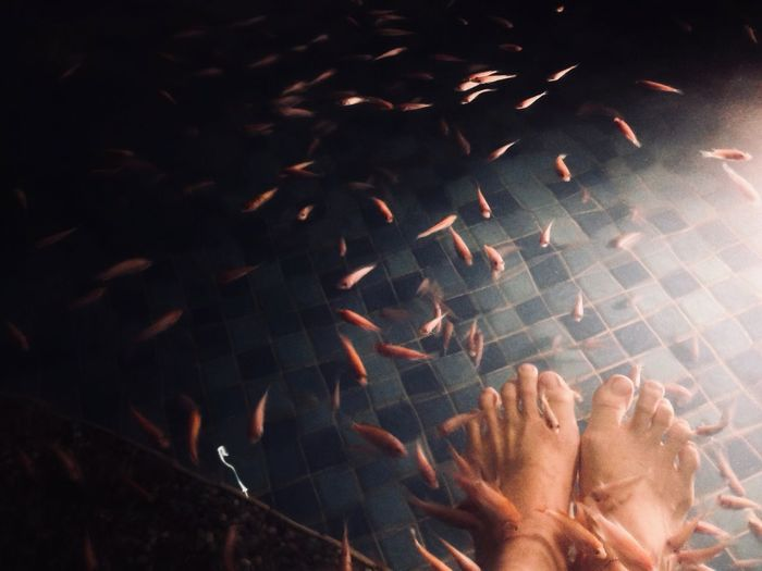 Low section of woman getting fish pedicure in pond