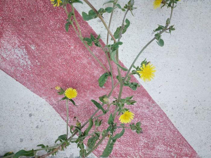 High angle view of pink flowering plant against wall