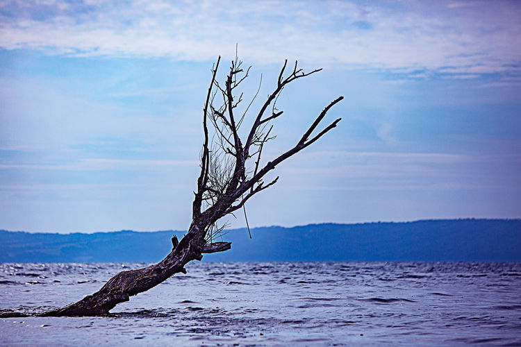 Old Tree Tree Bare Tree Beauty In Nature Branch Cloud - Sky Day Dead Plant Driftwood Isolated Nature No People Non-urban Scene Outdoors Plant Remote Scenics - Nature Sky Tranquil Scene Tranquility Tree Tree Trunk Trunk Water