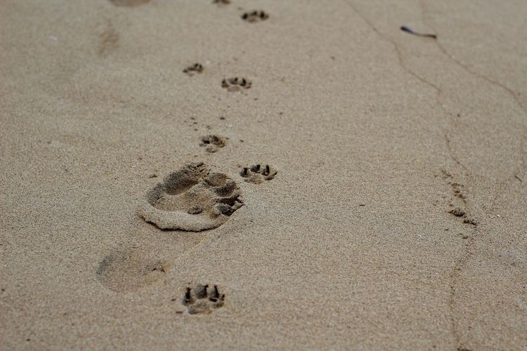 Sand Beach Nature Paw Print Outdoors Animal Track Day No People Track - Imprint Close-up
