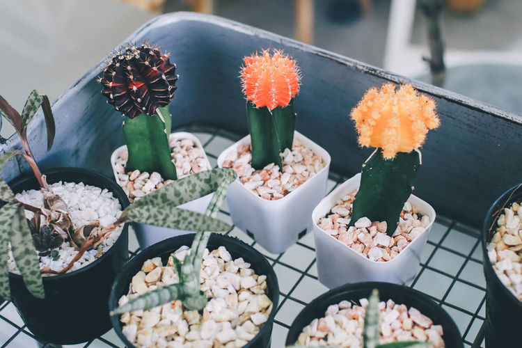 High angle view of succulent plants for sale in store