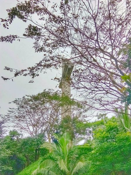 Mount Samat Nature Growth Outdoors Tree Branch Day No People Leaf Plant Beauty In Nature Backgrounds Grass Fragility Freshness Close-up Sky Animal Themes