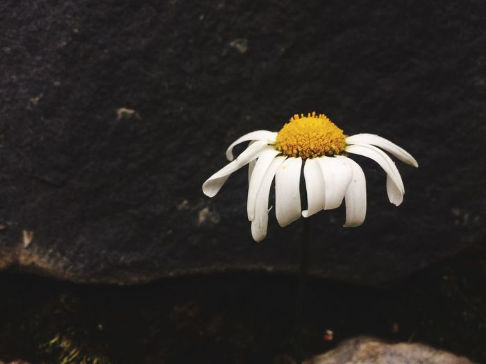 Flower Flowering Plant Fragility Vulnerability  Freshness Plant EyeEmNewHere