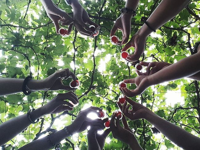 Tree Nature Outdoors Low Angle View Togetherness Friendship Adventure Summer Leaf People Human Arm Group Shot