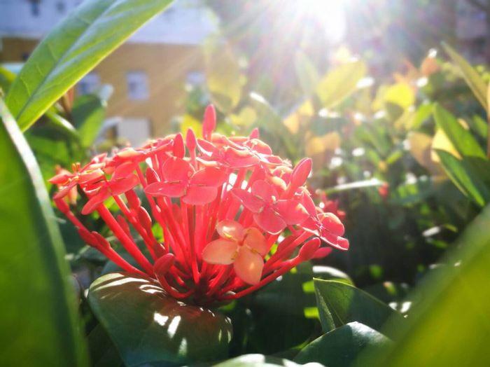 #希望 花的盛開 陽光普照 就擁有希望 別對生活絕望 別對人失望 相信期待 未來一定會很美的