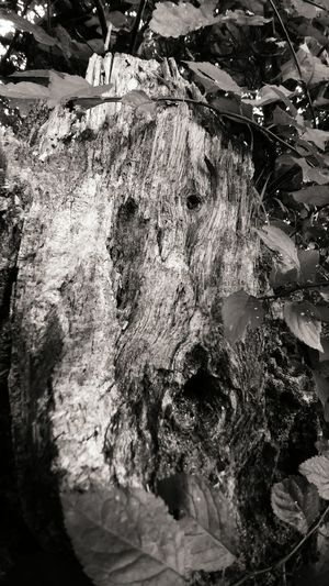 Tree Tree Trunk Nature Close-up Beauty In Nature No People Black And White Black&white LG  Smartphonephotography Smartphone Photography Lg G5 Lgg5photography Face Tree Facetree Monochrome Photography