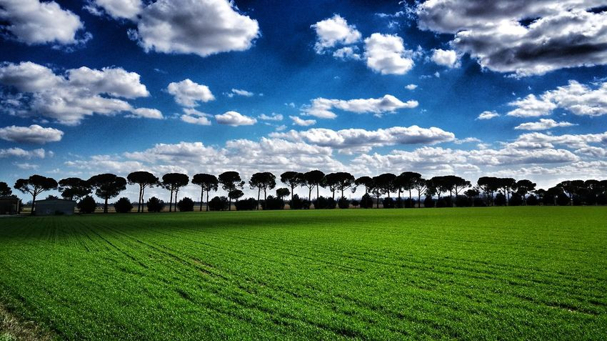 Soccer Field Agriculture Field Sky Grass Landscape Cloud - Sky Green Color Agricultural Field Grass Area Cultivated Land Farmland Tranquil Scene Plantation Countryside Farm Mustard Plant