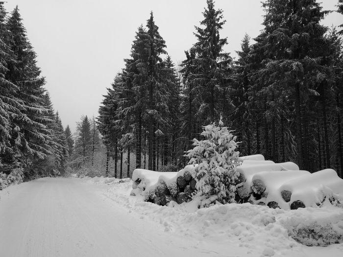 Winterworld Thüringer Wald Tree Snow Cold Temperature Snowing Winter Tree Area Forest Polar Climate Mountain Pine Tree Snowdrift Snowflake Deep Snow Powder Snow