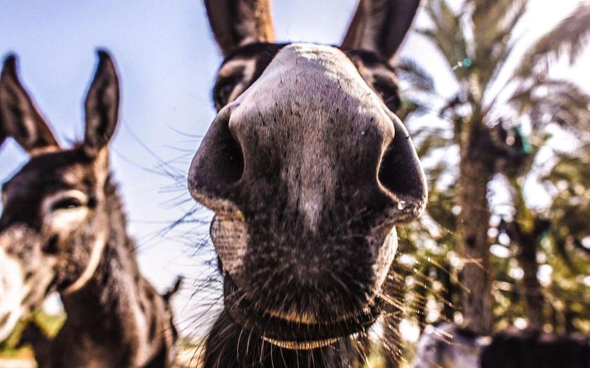 Belong Anywhere Donkey Palm Photography ✌️??