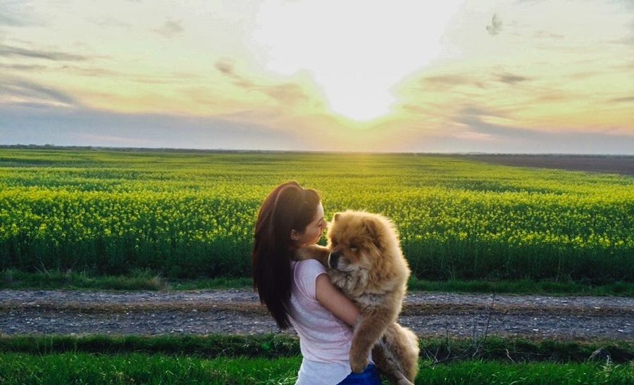 ChowChow I Love My Dog My Dog That's Me Taking Photos Enjoying Life Enjoying The Sun Relaxing Sunset Country Road
