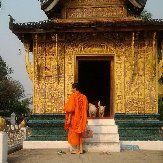 Travelshots Travel Everydayasia Everydaylife Dailylife Dailyphoto Photooftheday Photodaily Luangprabang Laos Watsandtemples Buddhism Wanderlust Monks Dogs Travelawesome Architecture Gold Goldendoor