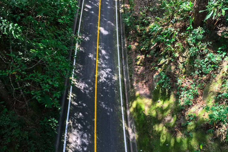 High angle view of trees by road in forest