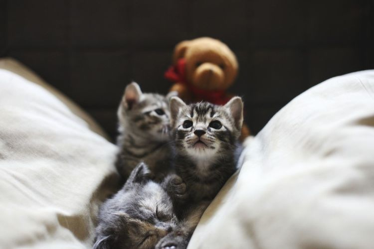 Close-up of kittens relaxing on bed
