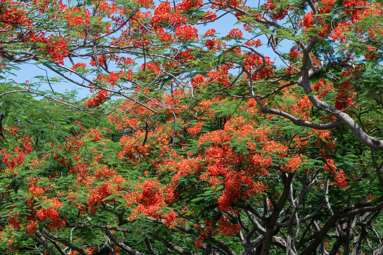 LOW ANGLE VIEW OF FLOWERING TREES