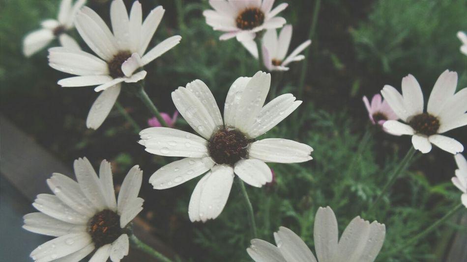 Flowers,Plants & Garden Flowers Flower Porn Macro_flower