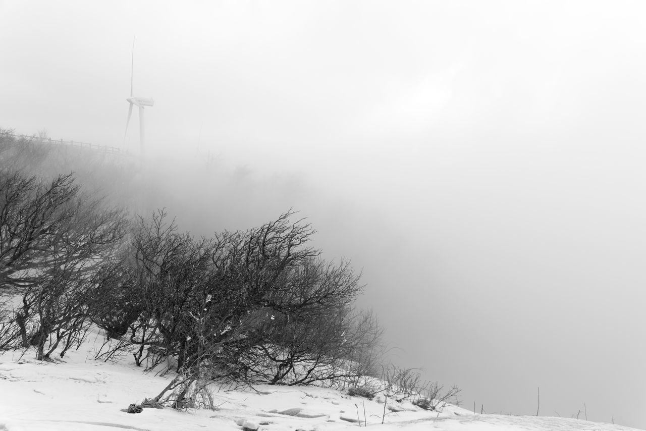 winter, cold temperature, snow, weather, nature, tranquility, beauty in nature, tranquil scene, fog, landscape, outdoors, scenics, day, no people, field, frozen, bare tree, windmill, tree, industrial windmill, sky