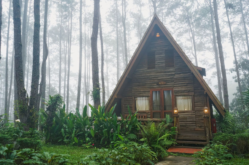 Wooden house amidst trees and plants in forest